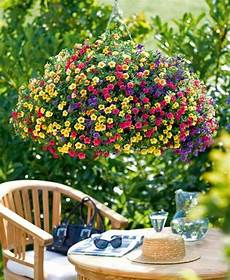 pot de fleur jaune beautiful million bell hanging baskets hanging basket