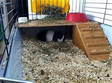 Comment Fabriquer Une Cabane Pour Cochon D Inde