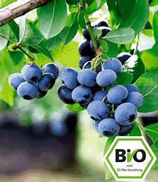 heidelbeeren pflanzen abstand bio heidelbeere reka 174 bio beerenobst bei baldur garten