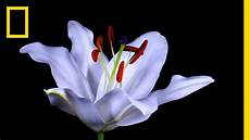 flower images hd gif time lapse flowers bloom before your