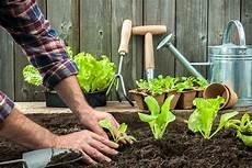 your garden grow your own vegetable garden fedhealth aid