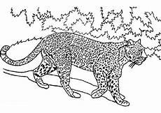 tiger zum ausmalen animaux