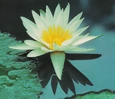 fiore della rinascita terra smeralda bijoux pagina 3