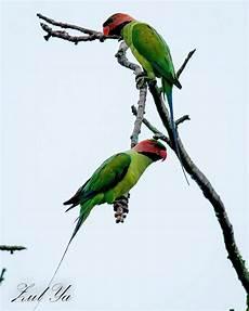 Zul Ya Birds Of Peninsular Malaysia December 2012