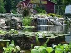 water garden in ohio call pond wiser at 330 833 frog pond wiser incorporated