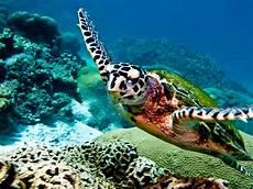 key west charters key west to cuba caribbean marine research
