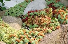 Steingarten Ideen Und Umsetzung Gartencenter Welter