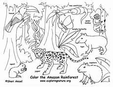 rainforest animals coloring pages preschool 17131 rainforest color pictures rainforest coloring page exploring nature educational