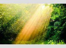 sunshine wallpaper nature   HD Desktop Wallpapers   4k HD