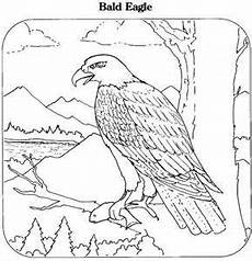 animals and their coloring pages 17201 printable coloring book bald eagle coloring page animals town animals bird coloring pages