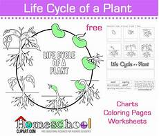 life cycle of a plant worksheet ks2 38 best plentiful plant unit images pinterest life science physical science and plant science