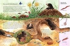 der kleine maulwurf und die tiere unter der erde bilder