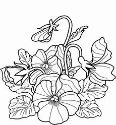 impressionnant pansy flower drawing easy spot and stripe