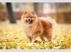 11 Adorable Small Dogs Breeds For Those Who Want Tiny Pets