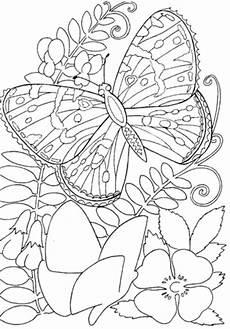 Ausmalbilder Blumen Schmetterlinge Butterfly Among Flowers Coloring Page Supercoloring