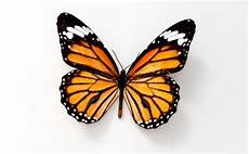 3d Model Butterfly Cgtrader