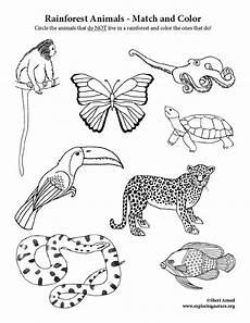 rainforest animals coloring pages preschool 17131 rainforest animals match and color