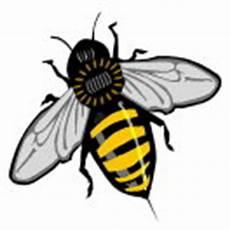 Insekten Malvorlage Kostenlos Malbuch Malvorlagen Tiere Insekten