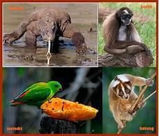 Ragam Fauna Asiatis Binatang Carapedia