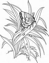 Coloring Butterfly Plants Coloringsheet Sky sketch template