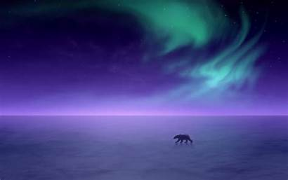Winter Aurora Borealis Bear Polar Night Background
