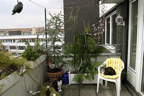 balkon sichern katze katzen balkon ideen