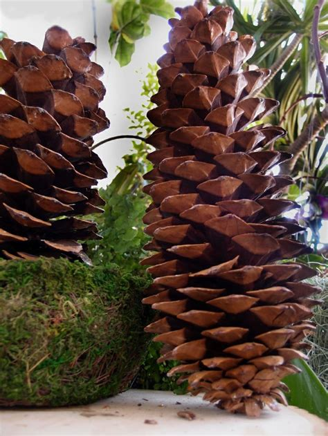 1000+ images about Sugar Pine Cone Decorations on