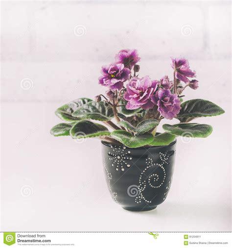 african flower violet pot preview