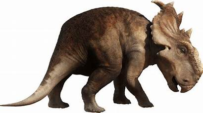 Dinosaur Dinosaurs Transparent Walking Pachyrhinosaurus Clipart Background