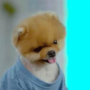 Pup GIFs - Find & Share on GIPHY