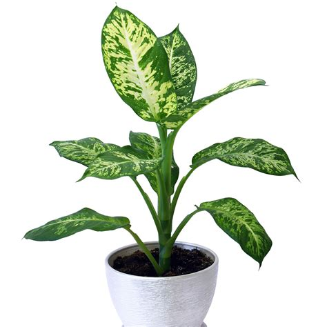 low light plants 10 best houseplants for low light sunset magazine