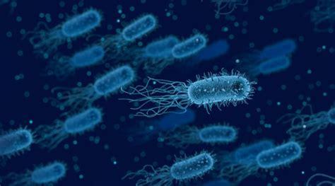 Paraziti u nama: Simptomi i kako se očistiti - ŠestaDimenzija
