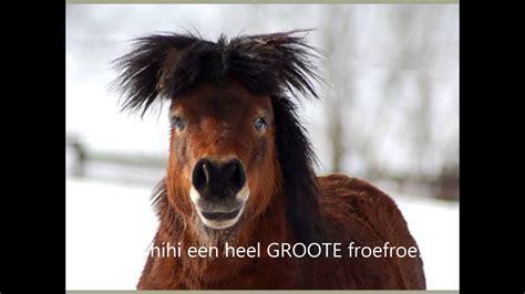 grappige paarden filmpje xd youtube