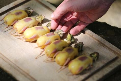 ortolan cuisine ortolans these small birds were considered a delicacy in