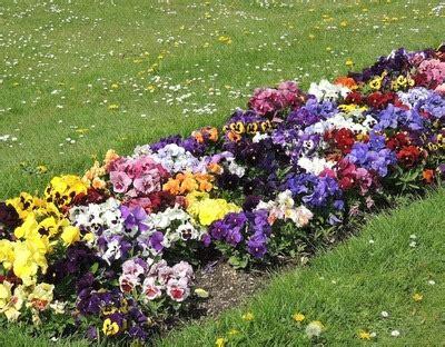 Der Garten Für Faule  Wachstum, Anlegen Säen & Ernten