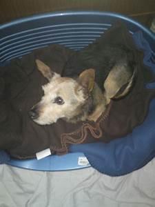 Chantal Perrichon Pas De Permis : canin sans famille les 4 pattes qui nous ont quitt s ~ Medecine-chirurgie-esthetiques.com Avis de Voitures