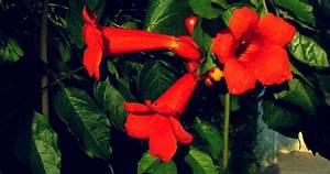 Fleurs Grimpantes Plein Soleil