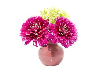 dalia in vaso fiore dentellare della dalia in vaso immagine stock