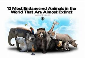 12 Most Endangered Animals in the World That Are Almost ...