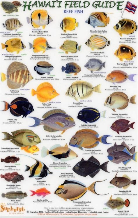 large reef fish google search fish chart hawaii