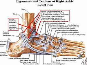 Image Lateral Ankle For Term Side Of Card