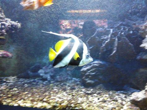 l aquarium de canet en roussillon en immersion le jeudi 2 avril 2015 senioriales