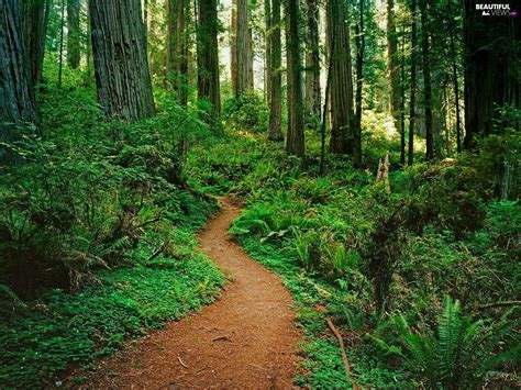 Different, Path, Trees, Viewes, Shrubs, Forest Beautiful