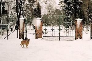 Katze Im Garten Begraben : hund begraben auf eigenem grundst ck kleinster mobiler ~ Lizthompson.info Haus und Dekorationen