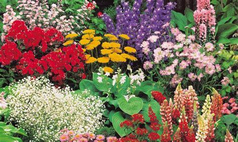 40erset Winterharte Pflanzen Groupon