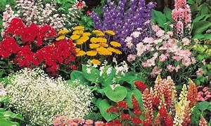 Winterharte Pflanzen Liste : 40er set winterharte pflanzen groupon ~ Michelbontemps.com Haus und Dekorationen