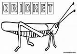 Cricket Coloring Insect Colorings Animal sketch template