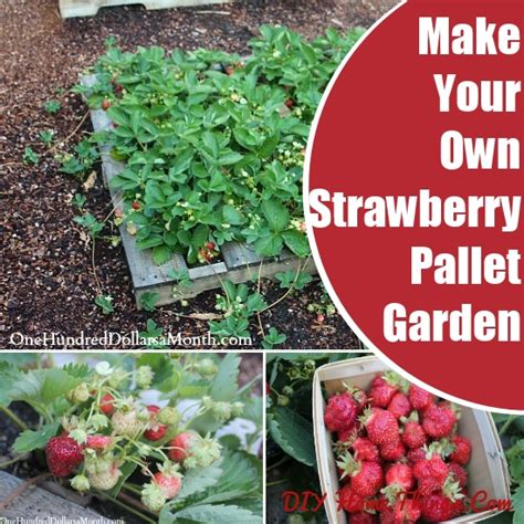 how to make your own strawberry pallet garden diy home