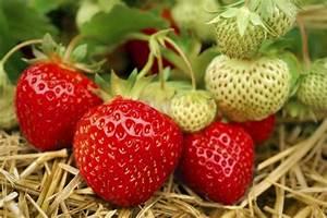 Erdbeeren Pflege Balkon : gem se f r balkon welche pflanzen sie wie anbauen k nnen ~ Lizthompson.info Haus und Dekorationen