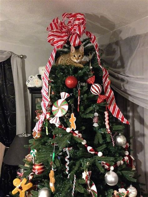 cats helping  decorate christmas trees part